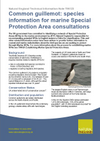 Common guillemot: species information for marine Special Protection Area consultations (Thumbnail link to record)