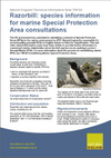 Razorbill: species information for marine Special Protection Area consultations (Thumbnail link to record)