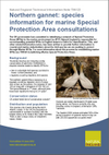 Northern gannet: species information for marine Special Protection Area consultations (Thumbnail link to record)
