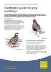 Illustrated guide to grey partridge (Thumbnail link to record)
