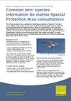 Common tern: species information for marine Special Protection Area consultations (Thumbnail link to record)