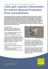 Little gull: species information for marine Special Protection Area consultations (Thumbnail link to record)