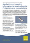 Sandwich tern: species information for marine Special Protection Area consultations (Thumbnail link to record)